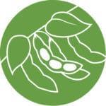 soybean-150x150