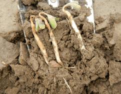 Pre-emergence herbicides